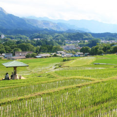 Terasaka Rice Terrace and Terasaka Ruins