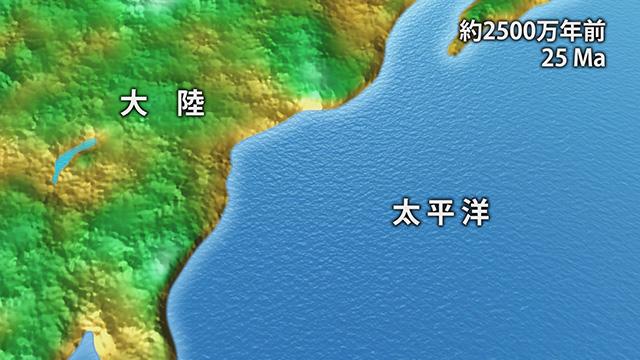 2500万年前(提供:埼玉県自然の博物館)