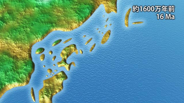 1600万年前(提供:埼玉県自然の博物館)