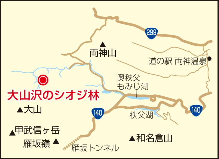 S02_大山沢のシオジ林