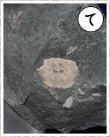 「て」・・・手にとって化石を体感 1500万年前の海証拠