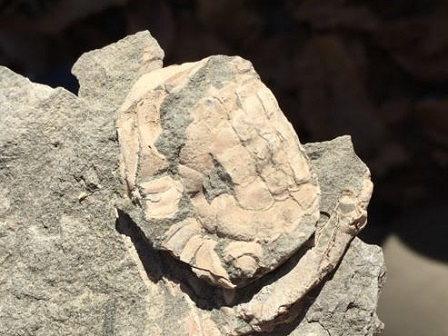 冬休み化石発掘体験ツアー・2回目が実施されました