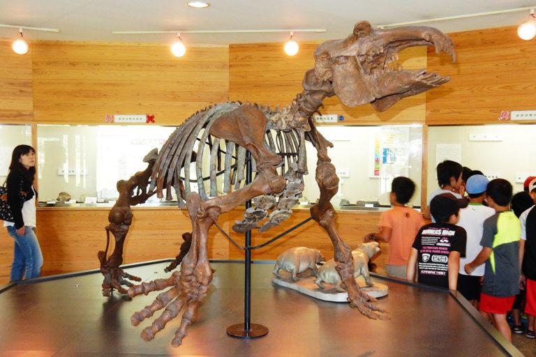 パレオパラドキシア骨格復元模型