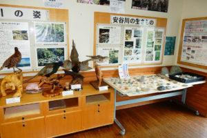 山里自然館