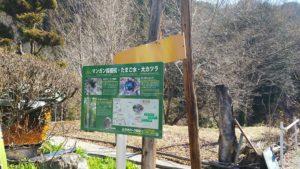 マンガン採掘抗・たまご水・大カツラの案内看板を設置しました!