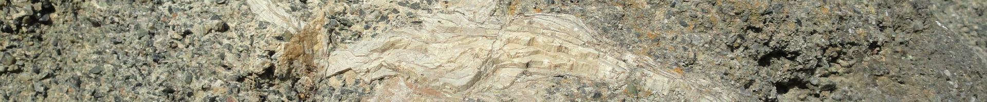 カキの化石